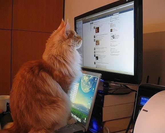facebook kedi